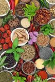 Spice and Herb Collection. Spice and herb food seasoning collection with fresh and dried spices and herbs Top view royalty free stock photography