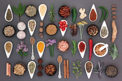 Spice and Herb Sampler Stock Images