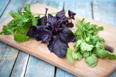 Spice herbs Stock Images