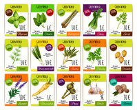 Spice and herbs vegetables price tags vector set Stock Photos