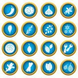 Spice icons blue circle set Royalty Free Stock Image
