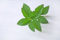 Spice leaf. Spice leaf on a white background Royalty Free Stock Photography