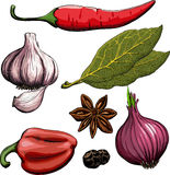 Spice. Onion, garlic, pepper, bay leaf, hot pepper. Drawing woodcut method Stock Photos