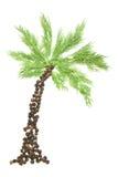 Spice palm Stock Photography