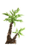 Spice palm Royalty Free Stock Image