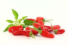 Spice paprika Stock Photos