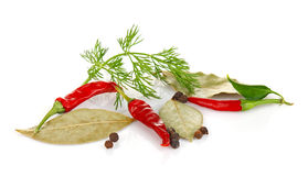 Spice relish and greenery. On white background Stock Photos