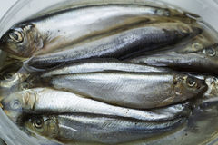 Spice salted sprats Stock Photography