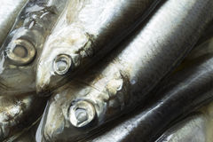 Spice salted sprats Royalty Free Stock Images