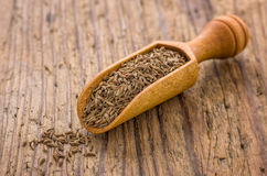 Spice scoop with caraway Royalty Free Stock Photos