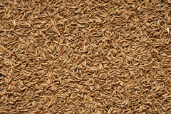 Spice seeds of caraway. Close-up. Royalty Free Stock Photos