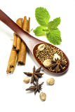 The spice on the spoon with green mint Royalty Free Stock Images