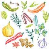 Spice vector elements Stock Photography