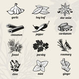 Spice vector icons set Royalty Free Stock Image