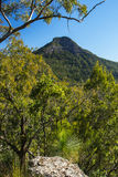 Spicers Gap Lookout in the Scenic Rim, Queensland Stock Images
