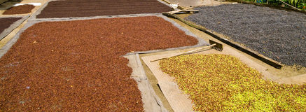 Spices. Photo of spices curing under the sun Royalty Free Stock Images