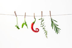 Spices. Herbs and chilli hanging on a string like laundry Royalty Free Stock Image