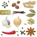 Spices stock illustration