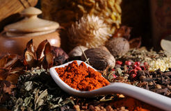 Spices. With a white spoon stock image