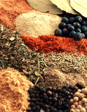 Spices. Background of various colorful spices Stock Images