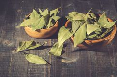 Spices of bay leaf in rural style/bay leaf on a dark wooden surface royalty free stock images