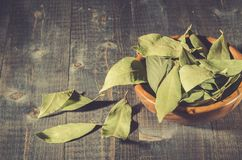 Spices of bay leaf in rural style/bay leaf on a dark wooden surface. Copy space stock photo