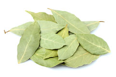 Spices bay leaves  close-up. Royalty Free Stock Image