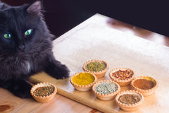 Spices and cat expert in smell and taste Royalty Free Stock Images