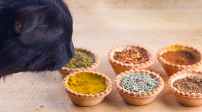 Spices and cat expert in smell and taste Stock Photo