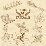 Spices Of The Caucasus. A collection of Royalty Free Stock Images