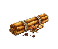 Spices: cinnamon, anise, cloves. Watercolor illust Royalty Free Stock Image
