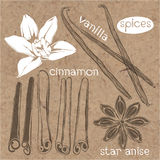 Spices. Cinnamon,vanilla and star anise.Vector set, hand drawn i Stock Images