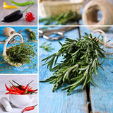 The spices. The collage. Royalty Free Stock Images