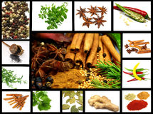 Spices collection Royalty Free Stock Image
