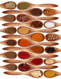 Spices collection Stock Image