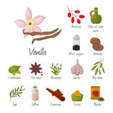Spices condiments and seasoning food herbs decorative healthy organic relish flavouring vegetable vector illustration. Spices condiments and herbs decorative Stock Photos