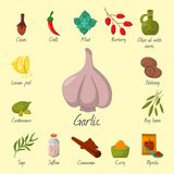 Spices condiments and seasoning food herbs decorative healthy organic relish flavouring vegetable vector illustration. Spices condiments and herbs decorative Stock Images