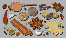 Spices, condiments and herbs decorative elements Royalty Free Stock Photo