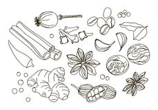 Spices, condiments and herbs decorative elements. Vector illustration, EPS 10 Stock Images