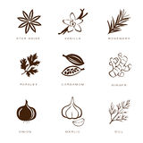 Spices, Condiments and Herbs Vector Royalty Free Stock Photos