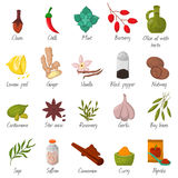 Spices, condiments and seasoning food herbs decorative elements vector. Spices, condiments and herbs decorative elements and icons. Seeds, fruit, flower buds Stock Photography