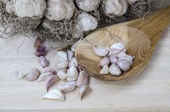 Spices cooking eating  food garlic Royalty Free Stock Photos