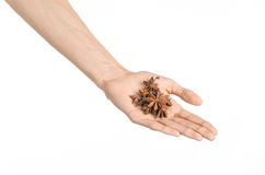 Spices and cooking theme: man's hand holding star anise isolated on white background in studio Royalty Free Stock Image