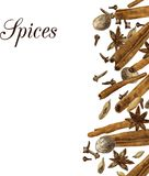 Spices drawing by watercolor Royalty Free Stock Photos