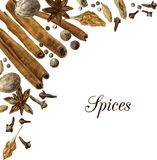 Spices drawing by watercolor Stock Image