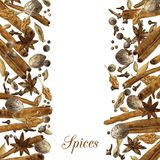 Spices drawing by watercolor Stock Images