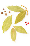 Spices. Dry laurel leaves and pepper Royalty Free Stock Photography