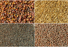 Spices. Fours different spices:  Szechuan Peppercorn, caraway seeds, poppy seeds, black mustard seeds Stock Photography