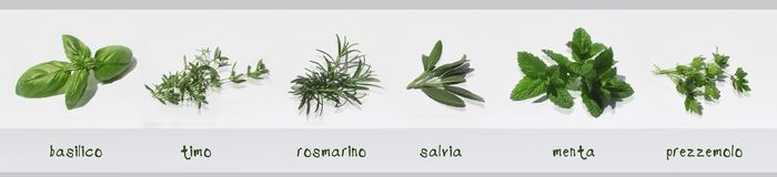 Free Spices Fresh Herbs Isolated With Their Names In Italian: Basil, Thyme, Rosemary, Sage, Mint, Parsley Stock Photos - 112695753
