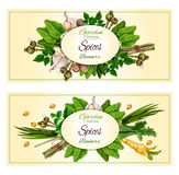 Spices and herbs banner set for food design Stock Photography